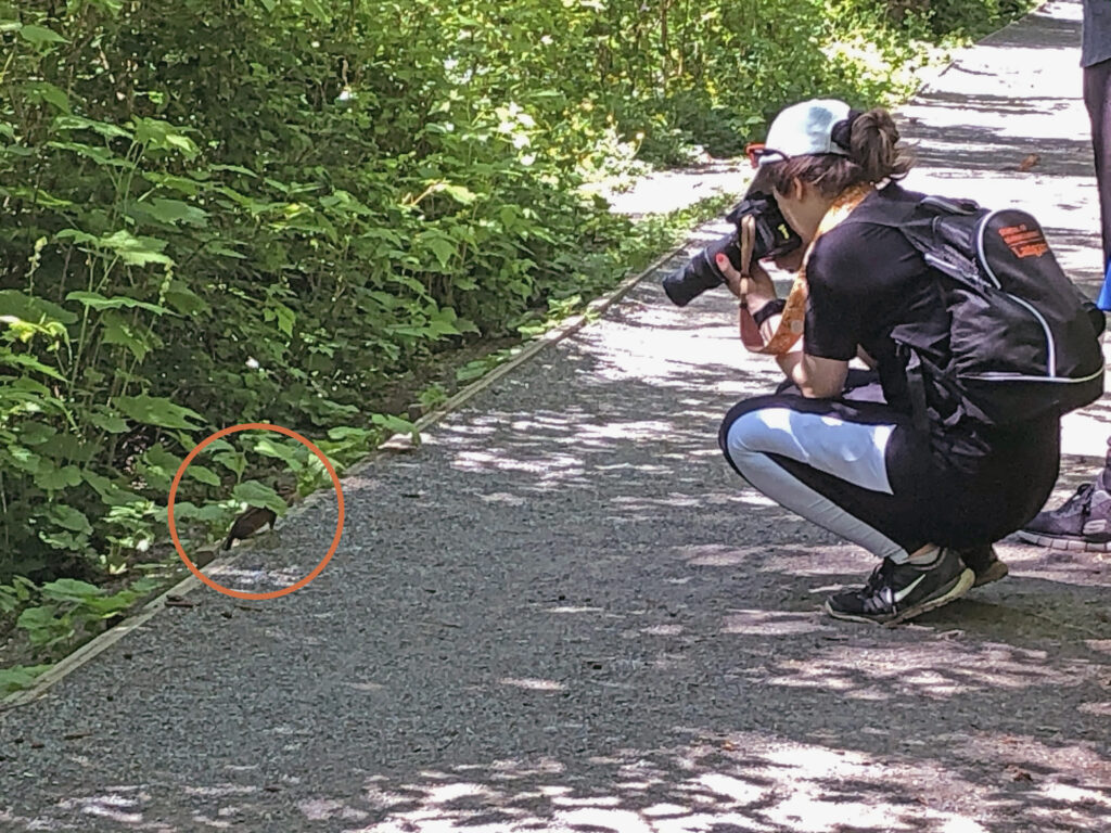 Melissa photographing a chipmunk