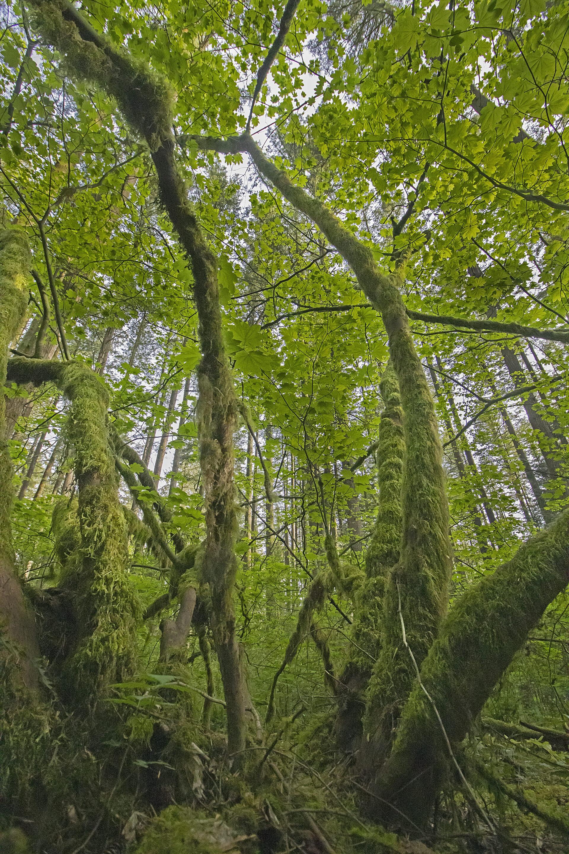 Mossy Trees, May 11, 2021