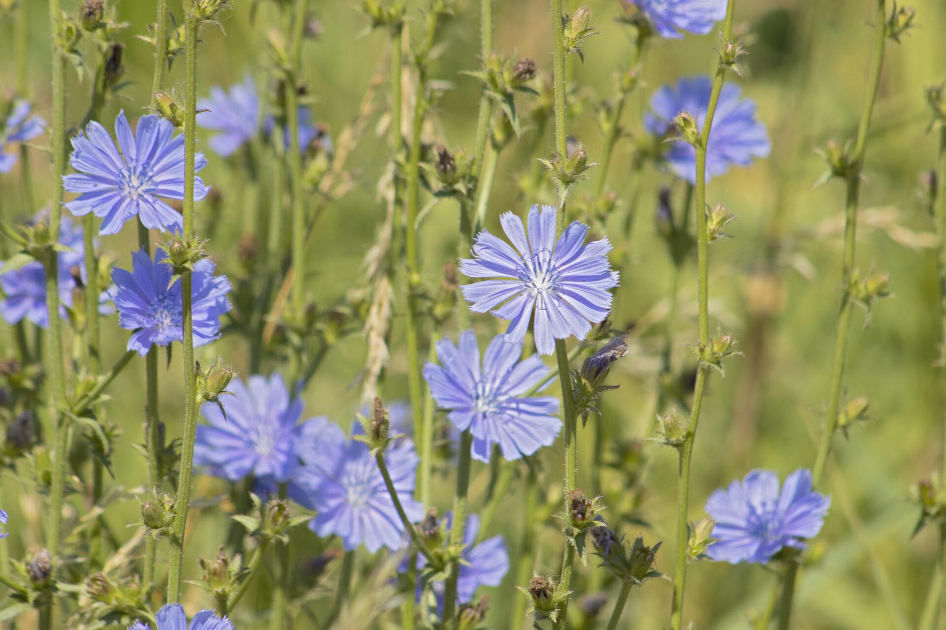 Wildflowers, July 19, 2021