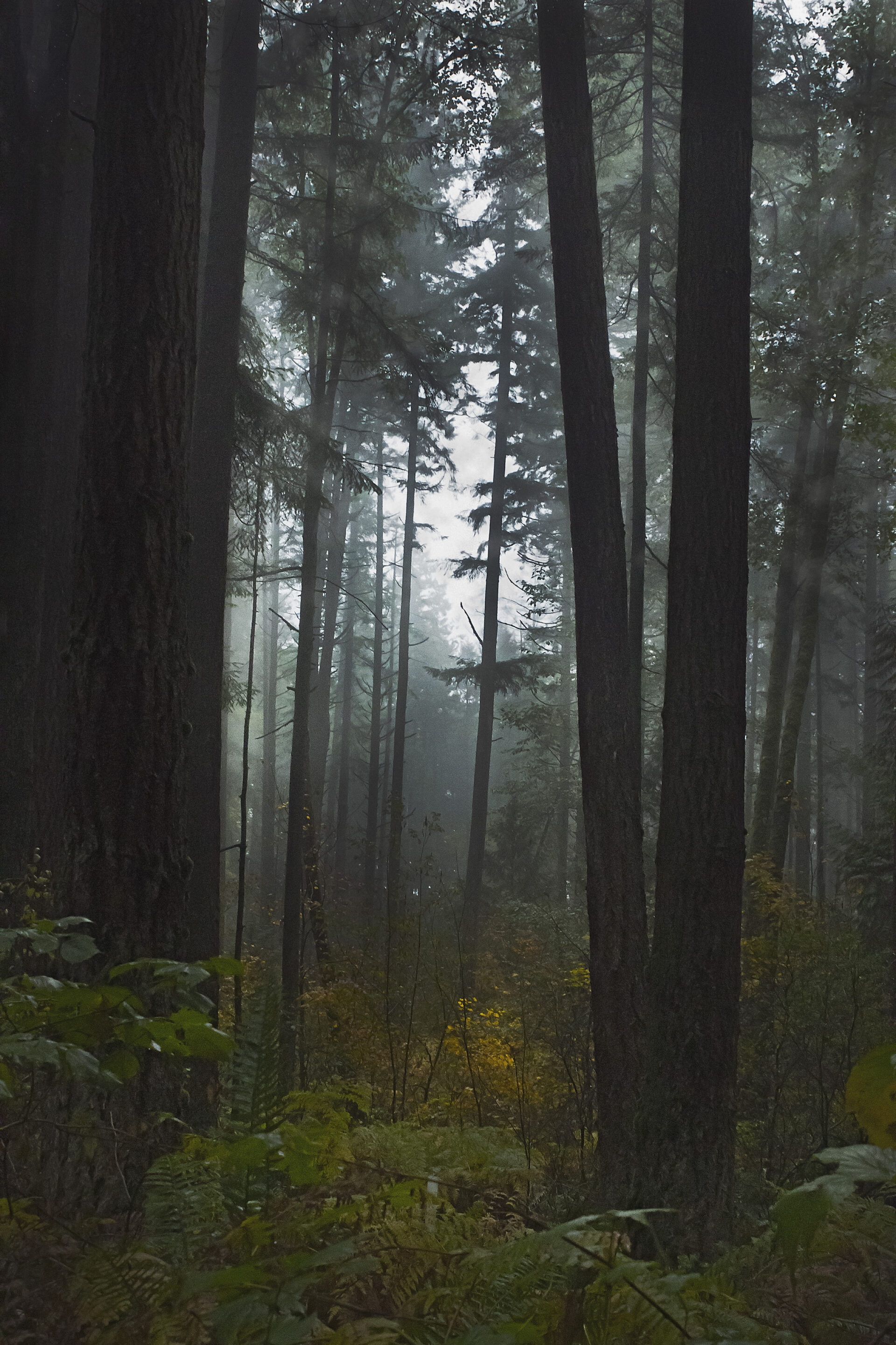Misty Day in the Woods, October 17, 2021