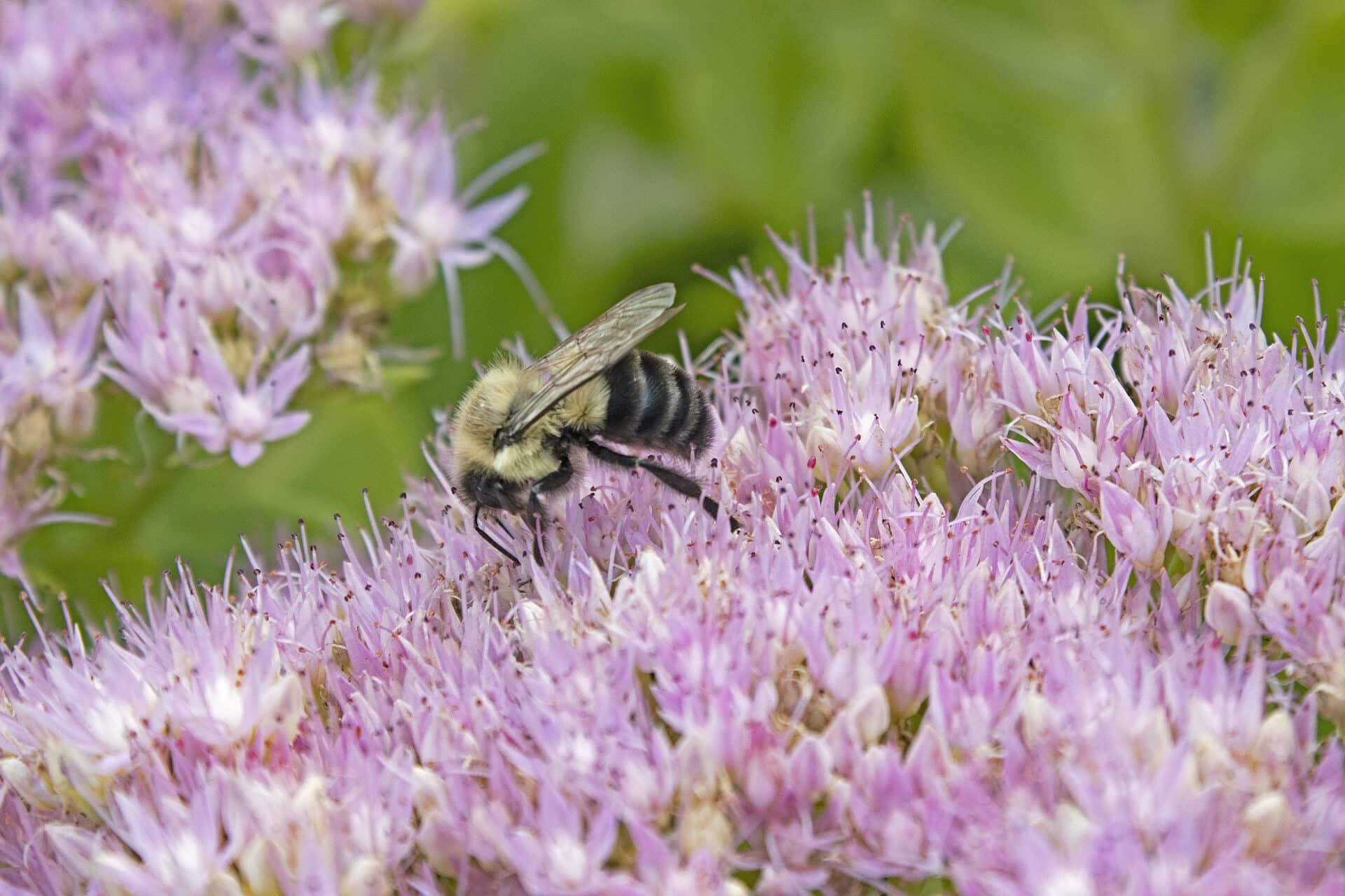 Bee, September 3, 2021